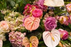 Anthurium Bouquet Stock Photos