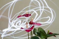Anthurium burza Zdjęcie Royalty Free