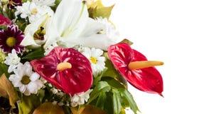 Anthurium flower bouquet Royalty Free Stock Image