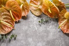 Anthurium kwiaty na szarość kamienia tle Obrazy Royalty Free
