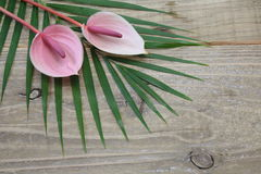 Anthurium on a leaf Stock Photo