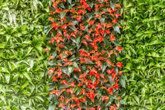 Anthurium lily and fern decoration Royalty Free Stock Photo