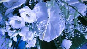 Anthurium och rosor Arkivfoton