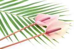 Anthurium op een blad Stock Fotografie