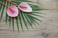 Anthurium på ett blad Arkivfoto