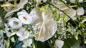 Anthurium and roses. White Anthurium and white roses Royalty Free Stock Images