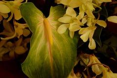 Anthurium verde Imágenes de archivo libres de regalías
