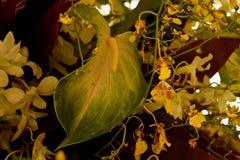 Anthurium verde Imagen de archivo libre de regalías