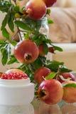 Anti--åldras framsidakräm för granatäpple, skönhetskönhetsmedel royaltyfri fotografi