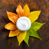 Anti-aging cream. On a background of green and dry leaves Stock Photography