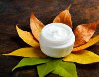 Anti-aging cream. On a background of green and dry leaves Stock Images