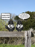 Anti capitalism. Comical contradictory anti capitalism bird protesters perched on a countryside fence demonstrating Stock Photo