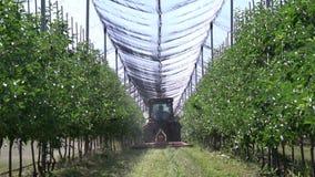 A anti rede da saraiva no pomar de maçã acima das árvores, trator está conduzindo vídeos de arquivo