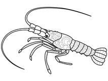 anti-spänningsfärgläggningbok för vuxna människor Skaldjur på botten av floden Cancer eller räka Langustsvartlinjer vektor illustrationer