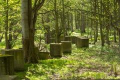 Anti tank blocks from world war 2 in woodland. A line of anti tank blocks wanders its way through woodland adjacent to the coast near North Berwick, Scotland Stock Photos