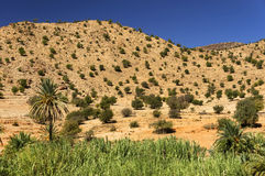 anti tizourgane гор Марокко kasbah атласа Стоковые Фотографии RF