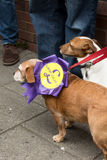 Anti UKIP dogs with rosette. Anti UKIP dogs wearing a UKIP out ! rosette Stock Images