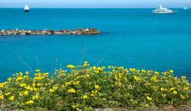 Antibes - Flowers over Mediterranean Sea Royalty Free Stock Photo