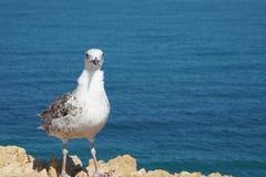 Antibes, Francia Immagine Stock
