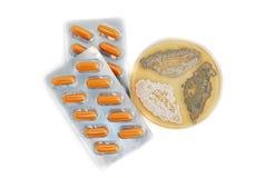 Antibióticos y hongos de la penicilina Imágenes de archivo libres de regalías
