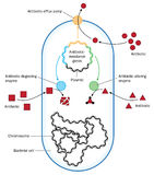 Antibiotic resistance. Bacterium showing methods of antibiotic resistance through efflux or enzymes. Created in Adobe Illustrator.  EPS 10 Stock Photo
