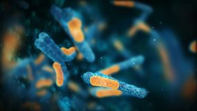 Antibodies attack the virus.