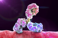 Antibody attacking bacterium Royalty Free Stock Photography