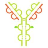 Antibody immunoglobulin molecule structure Royalty Free Stock Photo