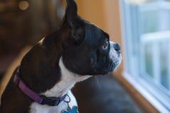 Anticipation Stock Photography