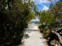 The Anticipation. A nice footpath leading us to the Gulf of Mexico, oh the anticipation stock photos