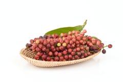 Antidesma thwaitesianum Muell.Arg., Ma-mao (thai name) Royalty Free Stock Photo