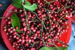 Antidesmavelutinosum Blume Royalty-vrije Stock Foto's