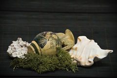 Antieke vaas en overzeese shells stock foto