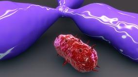 Antigene & bakterie Zdjęcie Royalty Free