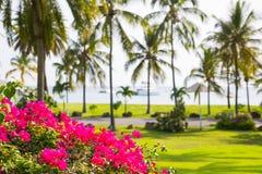 Antigua, Caribbean islands, Idyllic tropical palm garden in the the Freeman`s bay. Antigua, Caribbean islands, English Harbour - May 20, 2017: Idyllic tropical royalty free stock images