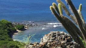Antigua Caribbean perfect cactus and blue water waves stock footage