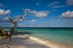 Antigua landscape. A beach of Antigua, Carribean sea winter 2009 stock image