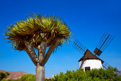Antigua Windmill Fuerteventura at Canary Islands Royalty Free Stock Images