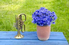 Antigue clay pot with cornflowers and brass trumpet. On blue wooden table in garden Stock Images