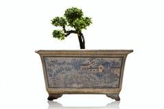 antik banyankruka Royaltyfri Fotografi