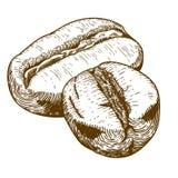 Antik illustration för gravyr av två kaffebönor Arkivfoton
