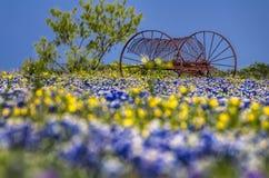 Antik lantgårdutrustning i ett fält av bluebonnets fotografering för bildbyråer