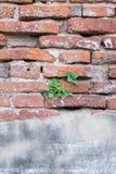 antik vägg Royaltyfri Fotografi