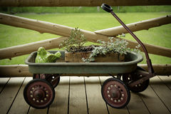 Antik vagnblommaskärm Royaltyfri Foto
