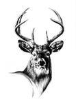 Antike Hirschkunst, die handgemachte Natur zeichnet Lizenzfreie Stockbilder