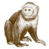 Antike Illustration des Stiches von Capuchin stock abbildung