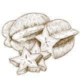 Antike Illustration des Stiches von Carambola vektor abbildung