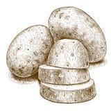 Antike Illustration des Stiches von Kartoffeln und von Scheiben vektor abbildung