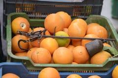Antike römische Laufgewichtswaage oder römische Balance in einem Kasten mit Orangen im Markt Stockbild