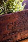 Antiker hölzerner Kasten mit Kräutergarten Stockfoto